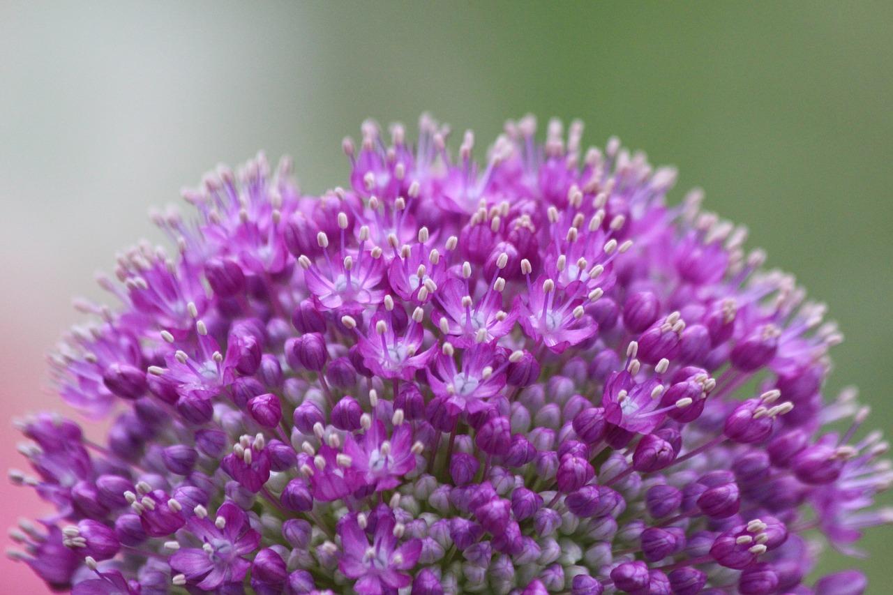 purple-1739212_1280