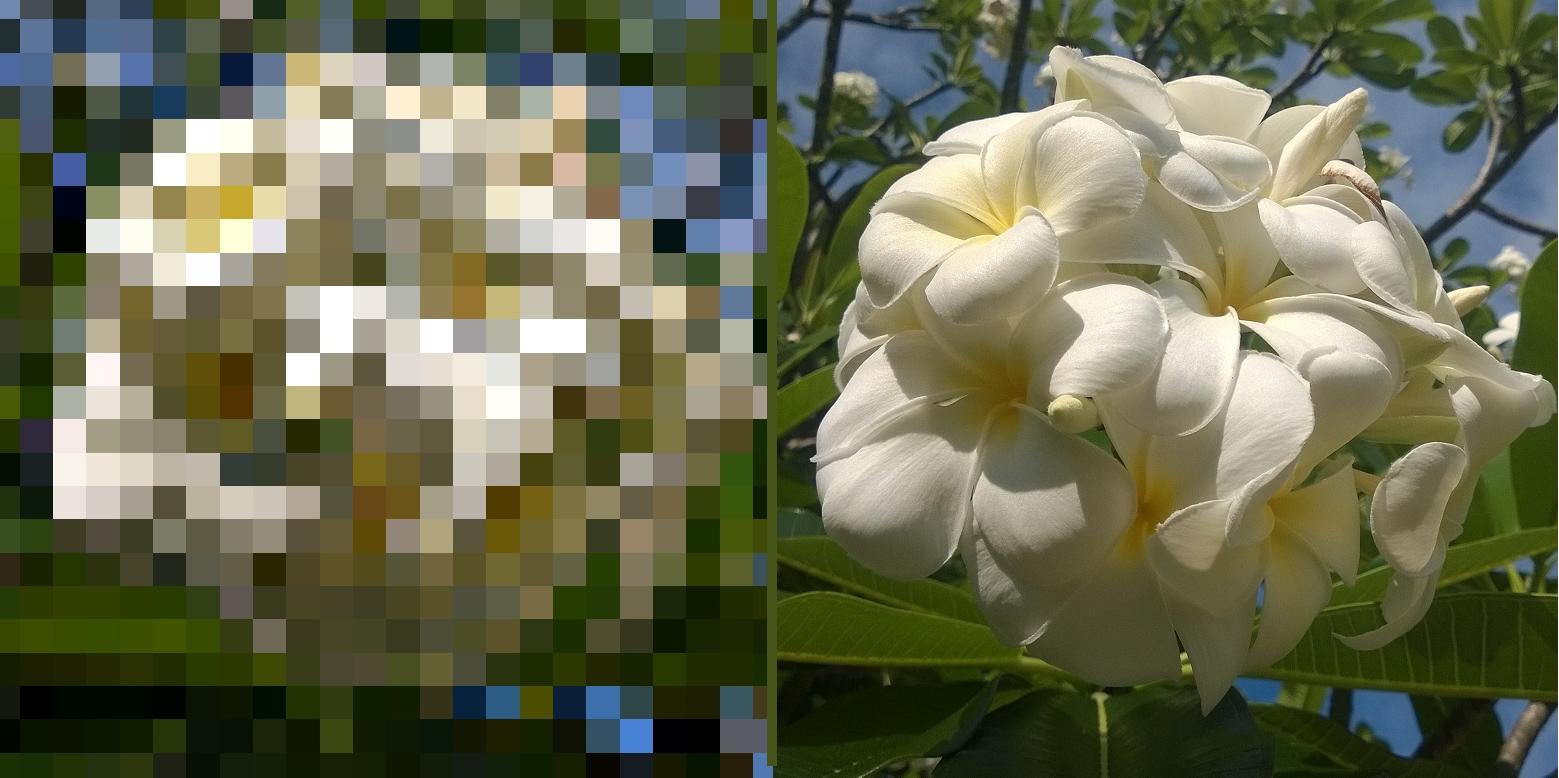 Plumeria combined